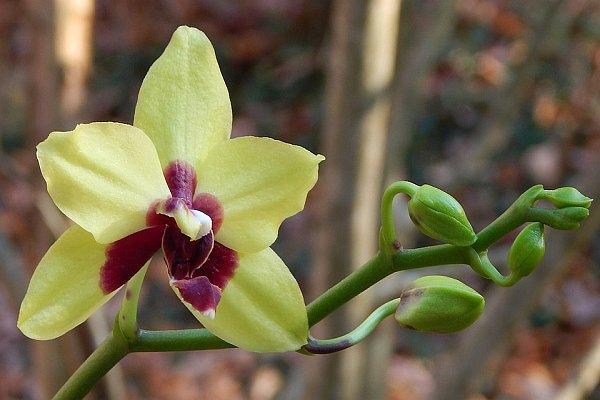 Подхранване за повече цветове при цветята